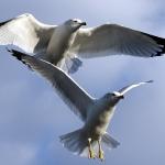 birds_0