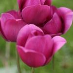 flower2_0